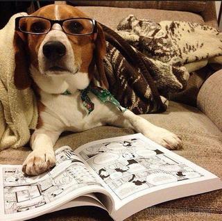15 собак, которые понятия не имеют, как нужно читать и почему-то нас это не удивляет