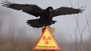 Самые радиоактивные места в России