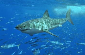 10 фактов, которые делают хищников еще опаснее