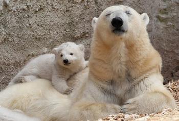 Как выглядят дети животных