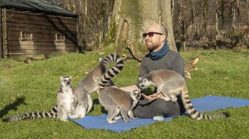 «Узбагойся!»: занятия йогой с лемурами избавляют от стресса и плохого настроения