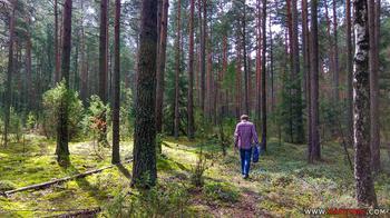 Как не заблудиться в лесу. И что делать, если это случилось