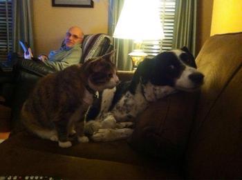 Животные, которые не знают, что такое личное пространство