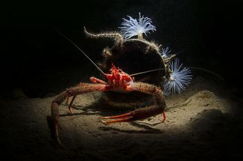 Во владениях Нептуна: подводное царство на фотографиях конкурса 2019 Underwater Photographer of the Year