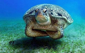 25 шуточных фактов о животных, которые не сделают вас умнее, зато посмеётесь от души