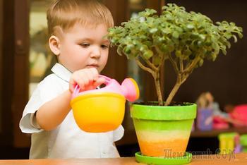 12 комнатных растений, которым не место в детской