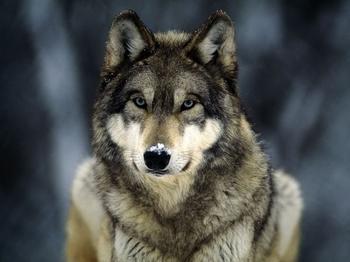10 животных, которых человечество боится больше всего