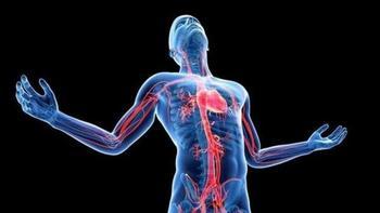 Природные биологически активные вещества: Профилактика заболеваний и поддержание здоровья