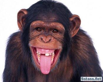 Прикольные обезьянки