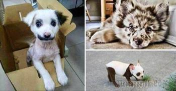 Несколько красивейших собак, которых природа одарила интересным окрасом