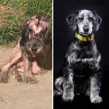 19 преобразившихся собак до и после того, как их спас неравнодушный ветеринар