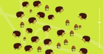 Удастся ли вам отделить ёжиков от грибов?