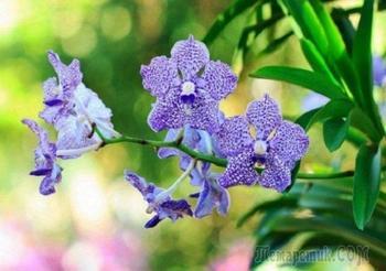 Ты узнаешь ее из тысячи: 10 самых запоминающихся орхидей
