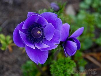 На людей доверчиво глядят все цветы, как дети в колыбели