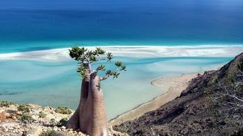 Архипелаг Сокотра - сокровищница Земли