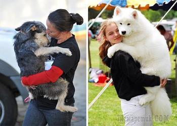 Люди и собаки - обнимашки