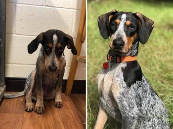 Фотографии собак и кошек, сделанные до и после того, как они нашли себе дом