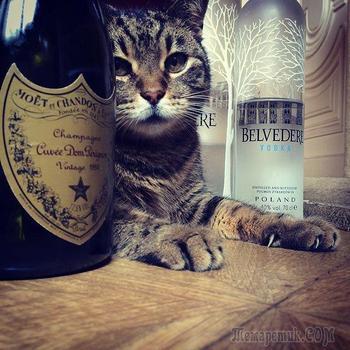 25 испорченных кошек, живущих роскошной жизнью, о которой мы можем только мечтать