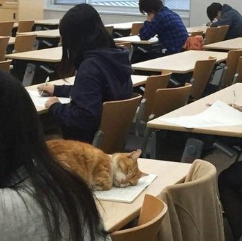 39 кошек там, где их быть не должно