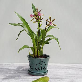 Как сажать орхидею в горшок: правила, секреты и полезные советы