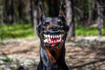 Люди делятся фото своих собак в страшных намордниках, и вы точно не захотите их погладить