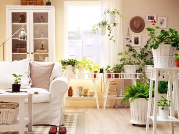 История комнатных растений