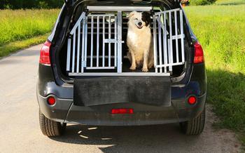 Ваша собака пролает «спасибо»: 13 полезных штук для путешествий