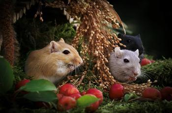 Красивые маленькие мышки