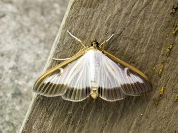 Способы результативной борьбы с бабочками-вредителями