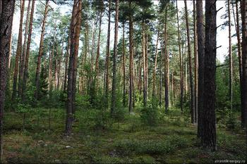 Июльский лес