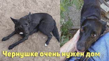 Собака-инвалид Чернушка в поисках любящего хозяина