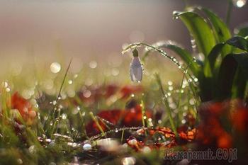 Оживляющий дождь