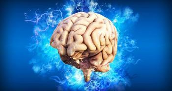 Спит или бдит? Чем заняты клетки мозга во время сна