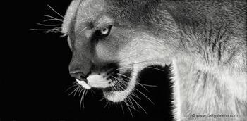 Гиперреалистичные портреты животных, нацарапанные на скретчборде