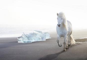 Очаровательные лошадки на исландских просторах