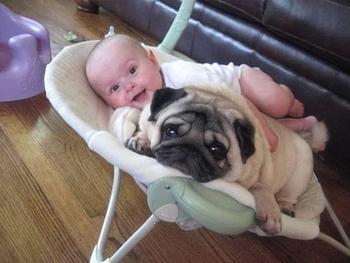 Собаки - лучшие друзья младенцев