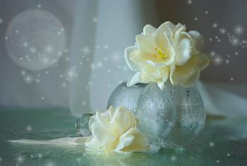 Как расшифровывает сонник живые цветы в ночных сновидениях