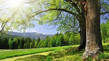 Целебная сила дерева, как деревья нас лечат