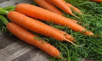 Описание характеристик и обзор лучших сортов моркови, урожайность