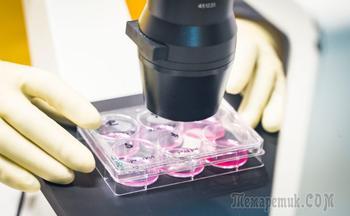 Роспотребнадзор сообщил об испытаниях вакцины от коронавируса на животных