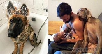 Милые снимки собак, после которых вы станете мечтать о лохматом друге