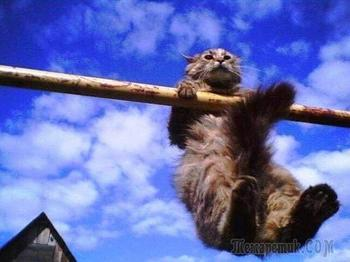 Фотоподборка котов-спортсменов