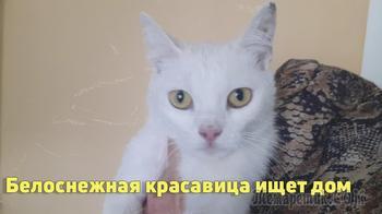 Ищем дом белоснежной ласковой кошечке