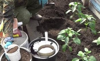 Зачем добавлять в рассаду кофе или молоко, или 12 советов по уходу за растениями