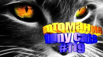 Смешные коты | Приколы с котами | Видео про котов | Котомания #119