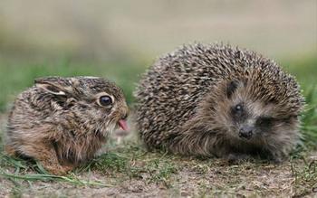 Животные тоже умеют показывать язык