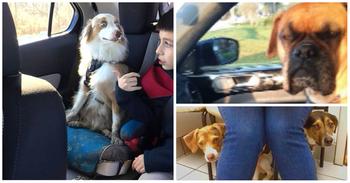 38 собак, узнавших, что их везут к ветеринару
