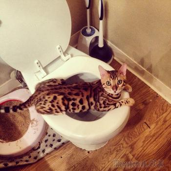 Новая подборка забавных кошек