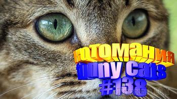 Смешные коты | Приколы с котами | Видео про котов | Котомания # 138