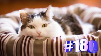 Смешные коты | Приколы с котами | Видео про котов | Котомания # 180